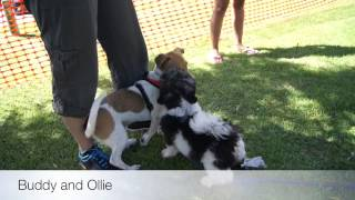Kiss Dog Training 2