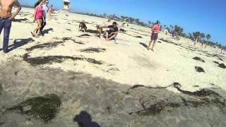 Dogs at Ocean Park Beach San Diego California GP010844