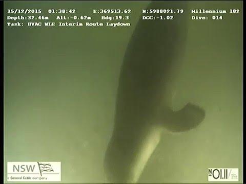 Seal surprises ROV crew