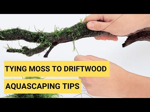 How to tie moss to Driftwood for your Planted Aquarium? -2019 [Aquascaping Tips]