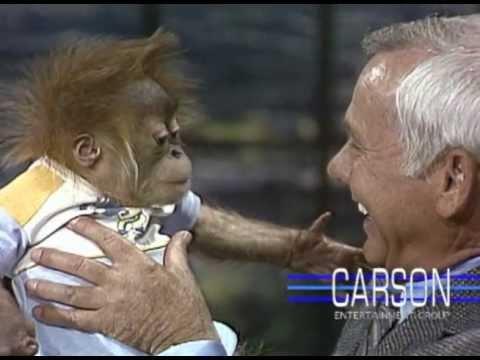 Baby Gorilla from San Diego Zoo: Orangutans on Johnny Carson's Tonight Show