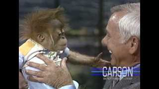 Baby Gorilla from San Diego Zoo: Orangutans on Johnny Carson's Tonight Show