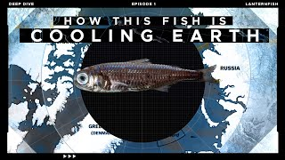 How this tiny Fish is Cooling our Planet