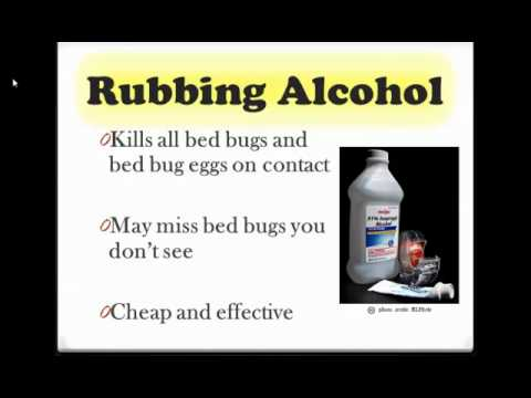 Best Way To Get Rid Of Bed Bugs For Good