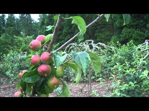 Back to Eden Trees - My Back To Eden Garden...