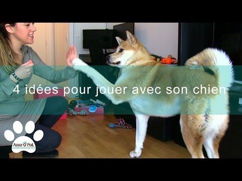 4 idées de jeux pour jouer avec son chien | Assur O'Poil