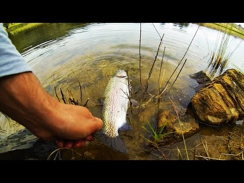 Trout Fishing At Walkersons, Dullstroom