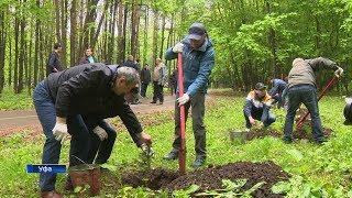 В уфимском парке лесоводов теперь будут расти стерлитамакские ели