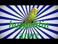 HOŞGELDİN ANNE Papağan ve Muhabbet Kuşu Konuşturma Sesi Ses Kaydı 1 SAAT