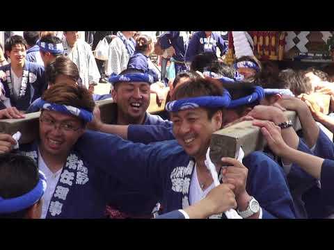 30年  茅ケ崎市「祝」大岡越前祭  神輿五基立派な渡御です。