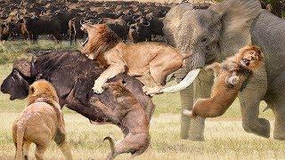 LIVE: AMAZING!!! Elephant