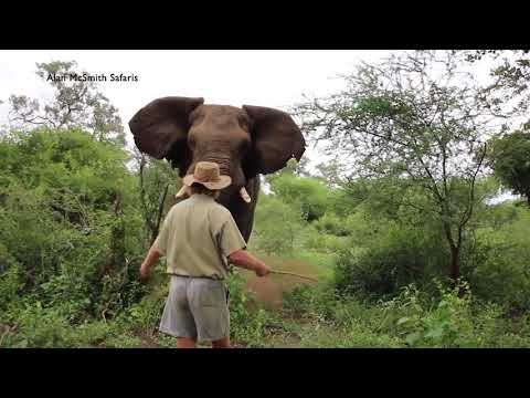 MAN HALTS CHARGING ELEPHANT