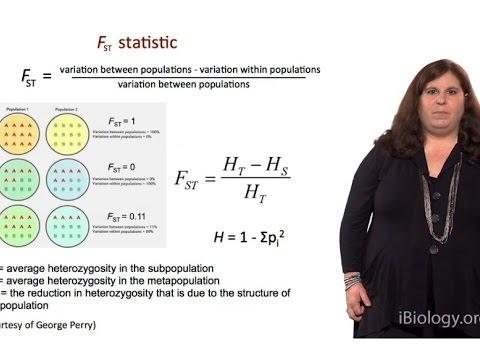 Measuring Genetic Variation (FST Statistic) - Sarah Tishkoff