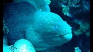 www.divebase.at - Red Sea - Hamata 2009 - 2/3