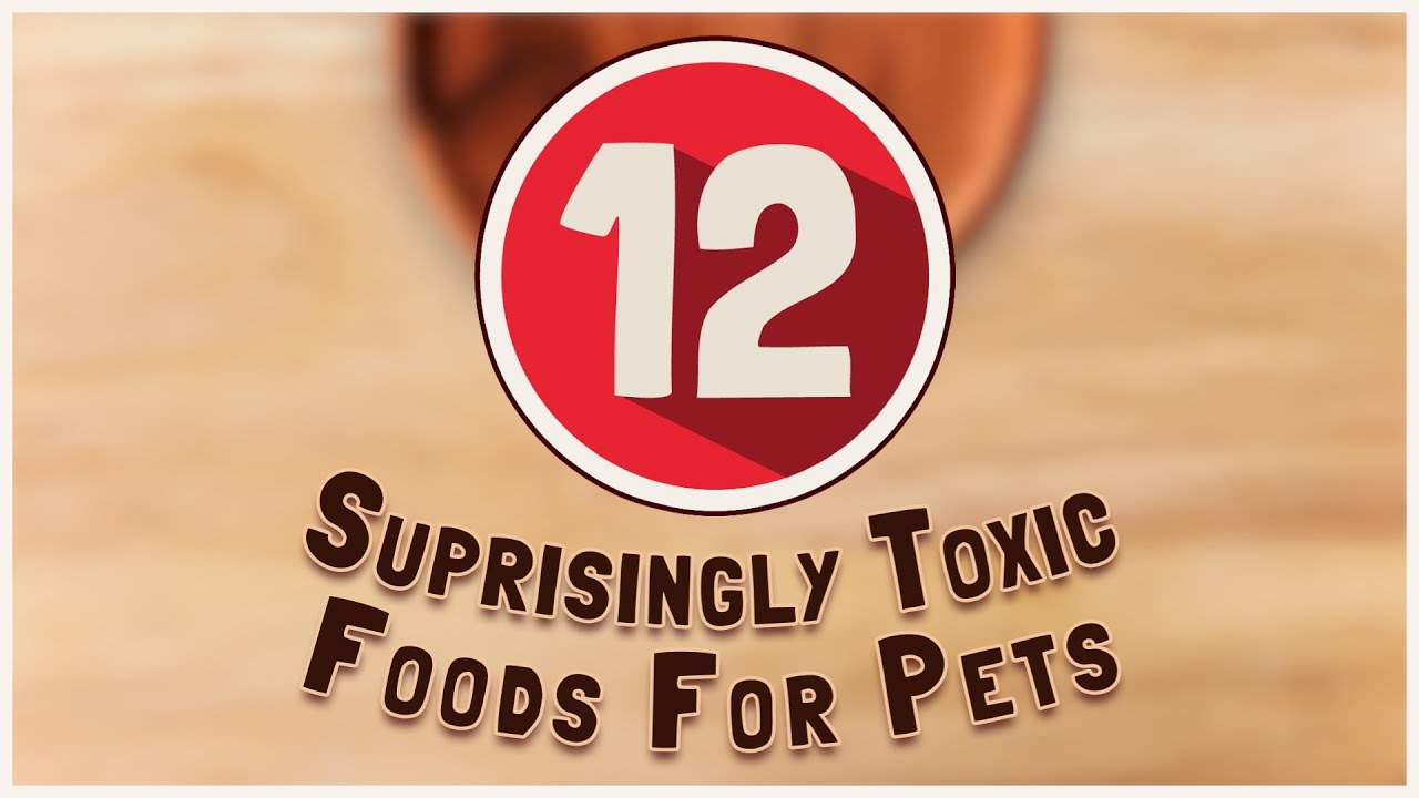 12 Surprisingly Toxic Foods for Pets