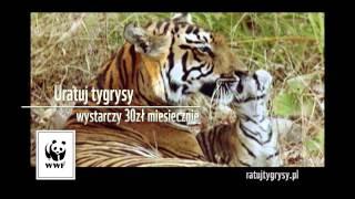 Ratuj tygrysy, pozostało ich już tylko 3200!