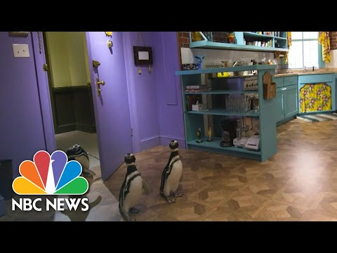 The One Where Penguins Visit The 'Friends' Set