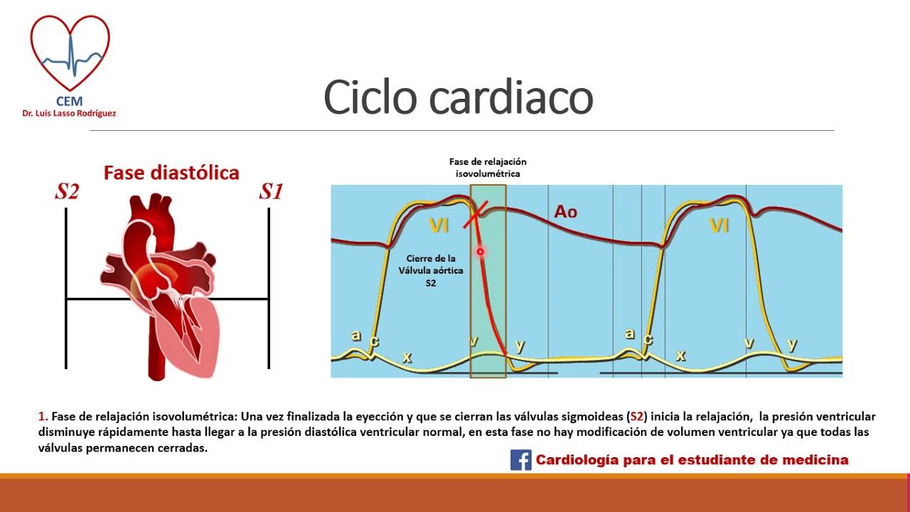 Fisiología de la presión sistólica y diastólica
