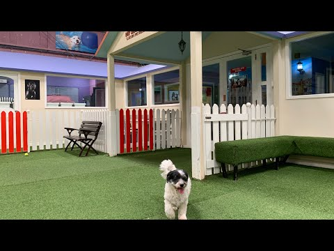 #27 Indoor Dog Park