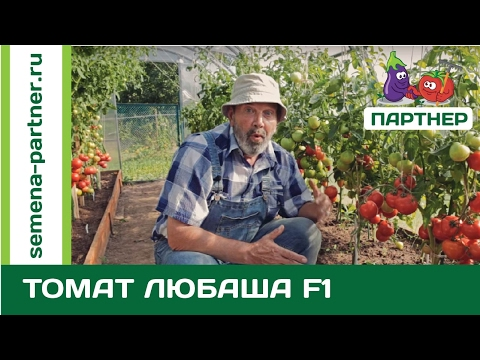 Ультраранний томат Любаша F1