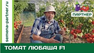 Ультраранній томат Любаша F1