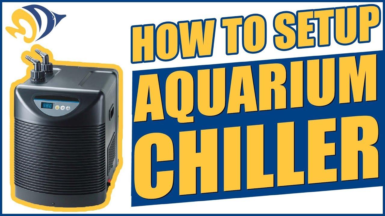 How to Setup an Aquarium Chiller