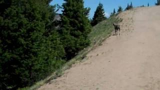 Kaiser Hiking Colorado Mine Trail