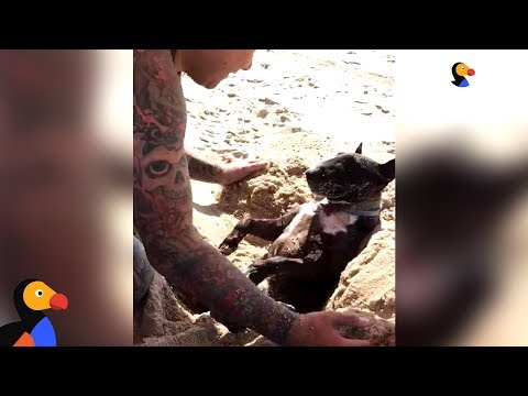 Dog Loves When Dad Buries Him In The Sand | The Dodo