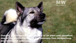 7 Hound Dogs