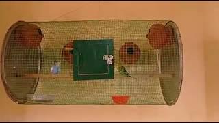 Love bird cage