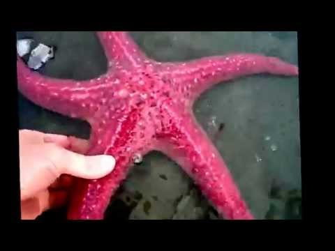 Starfish facts: 11 facts about Sea Stars