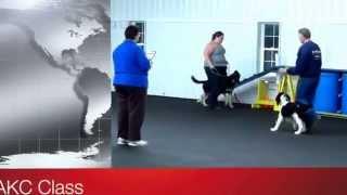 World Class Dog Kennels, Akc Cgc Class Elkhorn, Wi.