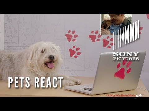 A DOG'S WAY HOME - Dog's and Cat's React (In Theaters January 11)