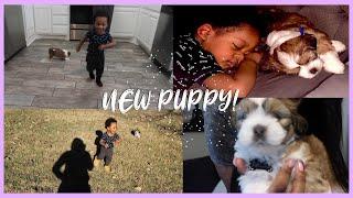 WE GOT A PUPPY! My son's new bff! ✨