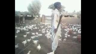 karachi target killing in poultry farm