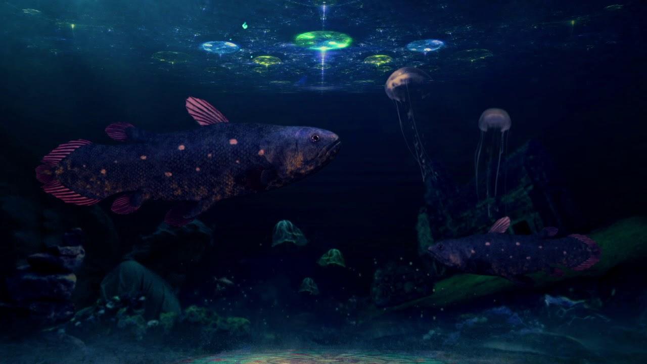 Aquarium Movie for Signage