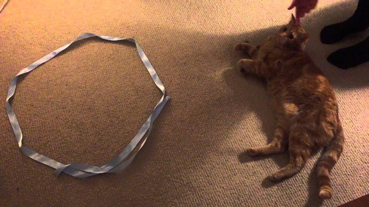 Science The Circle Cat Test Youtube