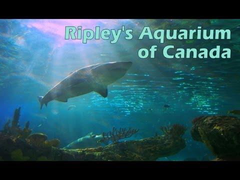 Ripley's Aquarium of Canada (Full Tour)