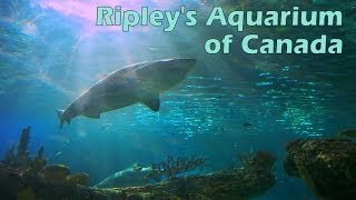 Ripley's Aquarium of Canada (Full Tour) thumbnail