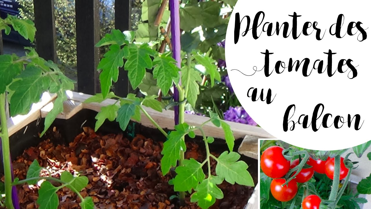 planter des tomates en pot pour le balcon astuce anti pucerons youtube. Black Bedroom Furniture Sets. Home Design Ideas