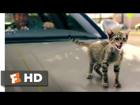 Keanu (2017) - Kitty Car Chase Scene (9/10) | Movieclips