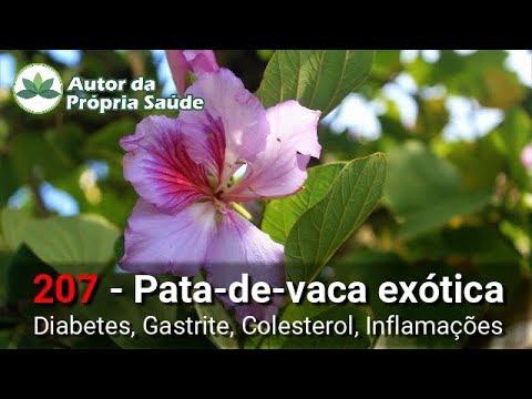 Autor da Própria Saúde - Pata-de-Vaca-Exótica [Diabetes, gastrite, colesterol, inflamações]