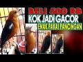 Anis Merah Muda Gacor Bagus Untuk Pancingan Masteran Punglor Ngedrop Agar Percaya Diri Lagi  Mp3 - Mp4 Download