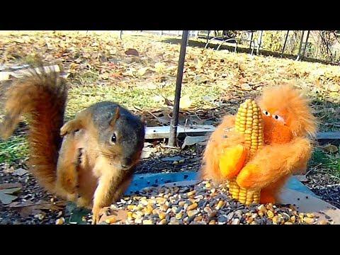 Biggest, Baddest, Squirrel Around -- PATCHES