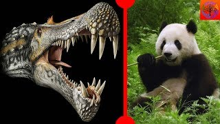 Dinosaurs Couldn't Stick Out Tongues & Ancient Pandas - 7 Days of Science