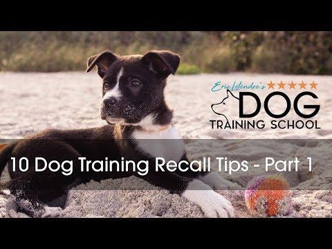 Ten Ways To Improve Your Dog's Recall  Part 1