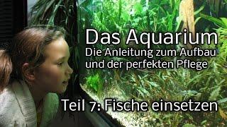 Das Aquarium - Die Anleitung zum Aufbau und Pflege. Teil 7: die Fische