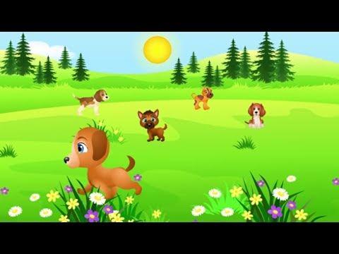 Muzyka Dla Dzieci O Pieskach Kundel Bury Pieski Małe Dwa Miś Tv