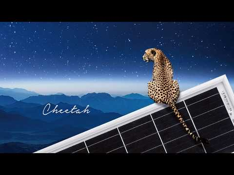 Introduction Video of JinkoSolar Cheetah 400W Solar Panel - YouTube