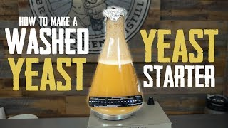 How to Make A Yeast Starter with Harvested and Washed Yeast